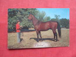 "Horse ""Citation""   Ref 3228 - Pferde"