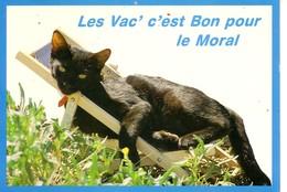 Les Vac' C'est Bon Pour Le Moral ( Chat Dans Un Transat - Chats