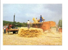 METIERS - AGRICULTURE - LE DEPIQUAGE - Cultures