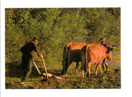 METIERS - AGRICULTURE - LE LABOUR - Cultures