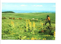 ARRACHAGE DE LA GENTIANE - Agriculture
