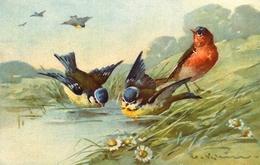 "Catharina KLEIN - Illustrateur - "" Oiseaux "" - éditeur Stehli N°134 - Klein, Catharina"