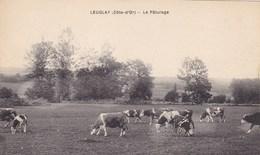 Côte-d'Or - Leuglay - Le Pâturage - France