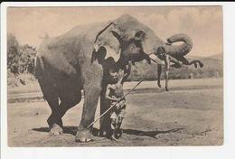 40 Ceylon Elephant - Sri Lanka (Ceylon)