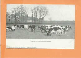 CPA - Troupeau Du HAUT GARDERE Au Pacage - J Ricard Propriétaire De Vignobles à LEOGNAN - Troupeau De Vache - France