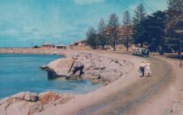 Victor Harbour SA Australia, Foreshore On Granite Island, C1950s Vintage Postcard - Victor Harbor