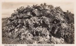 Redland Bay Australia, Tropical Fruit Monstera Deliciosa Shrub, C1910s/20s Vintage Sidues #733 Real Photo Postcard - Brisbane