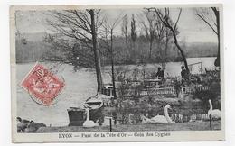 (RECTO / VERSO) LYON EN 1904 - PARC DE LA TETE D' OR - COIN DES CYGNES - BEAU CACHET - DECHIRURE HAUT A GAUCHE - CPA - Lyon