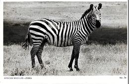 AFRICAN WILD  LIFE   ZEBRA - Zebras