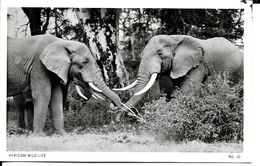 AFRICAN  WILD  LIFE - Éléphants