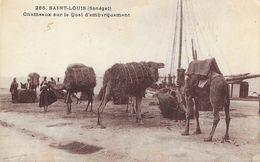 St Saint-Louis (Sénégal) - Chameaux Sur Le Quai D'embarquement - Photo P. Tacher - Senegal