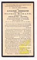 DP Amand Dooghe ° Lo-Reninge 1860 † Voormezele Ieper 1935 X S. Marant Xx H. Joye - Santini