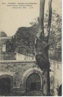 CPA ANIMAUX - Ours Brun ( Ursus Arctos )  ( Europe Septentrionale, Asie )  Au Jardin Des Plantes De PARIS - Ours