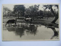 Photo:13.5x8.5cm 27 Saint-Aubin Du Thenney - Domaine Agricole La Haute Equerre - Vue De La Mare Et Des Vaches  A Voir ! - Francia