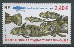 TAAF 2014 - N° 690 - Poissons - Lepidonotothen Mizops - Neuf -** - Nuevos