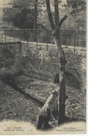 CPA ANIMAUX - Ours BLanc ( Ursus Maritimus)  ( Siberie  )  Au Jardin Des Plantes De PARIS - Ours