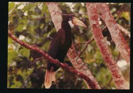 Indonesia - Jaarvogel Op Irian Jaya [AA7-1.887 - Indonésie