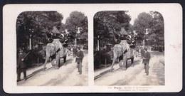 PARIS 16 - * PHOTO STEREOSCOPIQUE JARDIN D'ACCLIMATATION  - PROMENADE ELEPHANT * édit. STEGLITZ 1906 BERLIN - EXP. INCL. - Distretto: 16