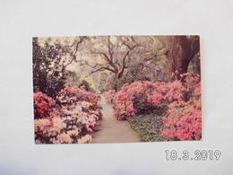 Wilmington. - Orton Plantation Gardens. - Wilmington