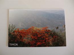 Postcard Postal Timor Montanha De Timor - Timor Oriental