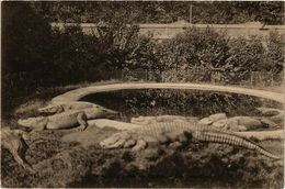 CPA PARIS 5e Jardin Des Plantes Les Crocodiles Ed. V.P. Paris (576999) - Arrondissement: 05