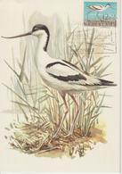Pays Bas Carte Maximum 1961 Oiseaux Avocette 736 - Cartoline Maximum