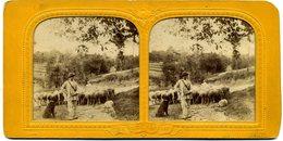 Photos Stéréoscopiques Couleur  Contre La Lumière - Scène De Genre - Un  Berger  Avec Ses Moutons  ( A 141) - Photos Stéréoscopiques