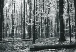 """Lot De 6 Snapshot. """" En Forêt De Soignes - Vallon Joséphine - Groenendael - Chapelle De La Reine, Dr&e - Photographs"""