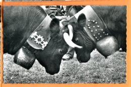 LOL403, Combat De Reines En Valais, Vaches D'Hérens, Photo Raymond Schmid, 310, Non Circulée - VS Valais