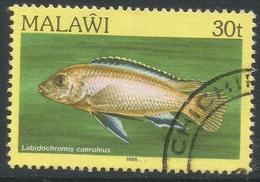 Malawi 1984 FIsh. 30t Used. SG 696 - Malawi (1964-...)