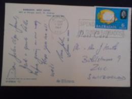 Barbades , Carte De 1967 Pour Zug - Barbades (1966-...)