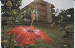 Postcard - Nipa Lodge Hotel, Orchid Lodge Hotel - Thailand - Unused Very Good - Postcards