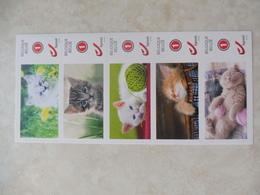 Timbre Belgique Duo Stamp Chats Cats - Belgique