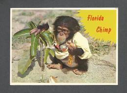 HUMOUR - ANIMALS - FLORIDA MONKEY SINGE THINKING OF YOU - FLORIDA HUNGRY CHIMP ENJOYS HIS HOT DOG - Humour