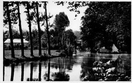 Chatillon-sur-Seine Promenade De La Douix Allée Des Platanes - Chatillon Sur Seine