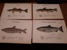 Old Brochure, Prospect - Fish - Autres Collections
