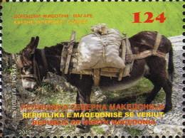 Republic Of North Macedonia/2019/Domestic Animals/Donkey - Macedonia