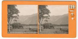 15464 - INTERLAKEN - Photos Stéréoscopiques