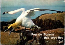 22 ARCHIPEL DES SEPT ILES - Fou De Bassan - France