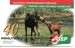 Animal  Jungle  Carte Prépayée Canada Phonecard  (G 90) - Canada