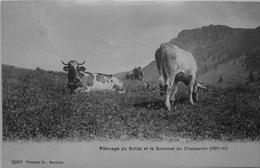 Paturage Du Soliat Et Le Sommet Du Chasseron - Frankrijk