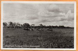Wageningen Suriname Old Real Photo Postcard - Surinam