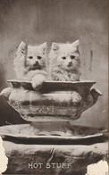 Cats  Kittens  Hot Stuff Damage Marks Bottom Corners - Cats