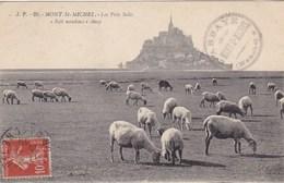 Mont St Michel, Les Prés Salés, Moutons, Sheep, Schapen (pk57518) - Le Mont Saint Michel