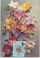 Jersey Carte Maximum 1974 Fleurs Freezia 89 - Jersey