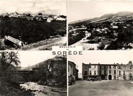 1 Cpsm Souvenir De Sorède - France