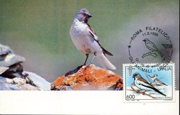 43882, Italia Maximum  1995,  Fringuello Alpino, (montifringilla Nivalis) - Moineaux