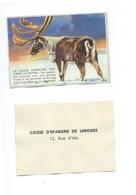RENNE La Faune Terrestre Chromo De La Caisse D'Épargne De Limoges 1960s TB 80 X 55 Mm - Autres