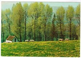Vlaamse Ardennen, Vijf Seizoenen, Bloei Te Etikhove (pk55686) - Maarkedal