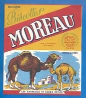 37 - TOURS, 14 RUE DE COURSET - BUVARD ILLUSTRÉ- BISCOTTES MOREAU - ANIMAUX ET LEURS PETITS - DROMADAIRES - Biscottes